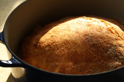 bread-in-dutch-oven